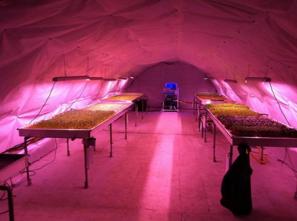 выращивание растения в тоннеле