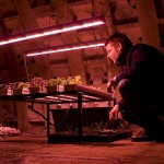 выращивание растения в метро