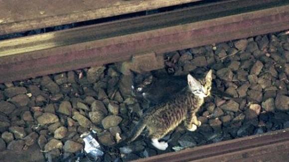 Котенок на рельсах метро